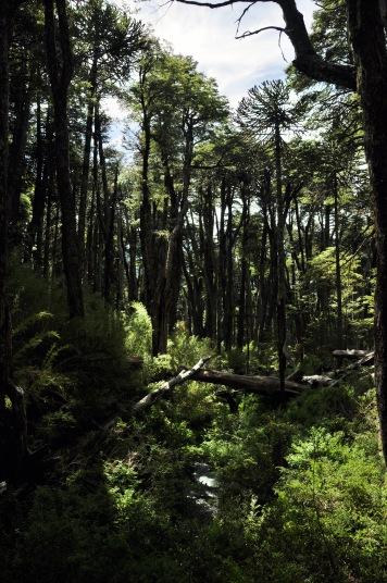 Bosque sendero El Carpintero